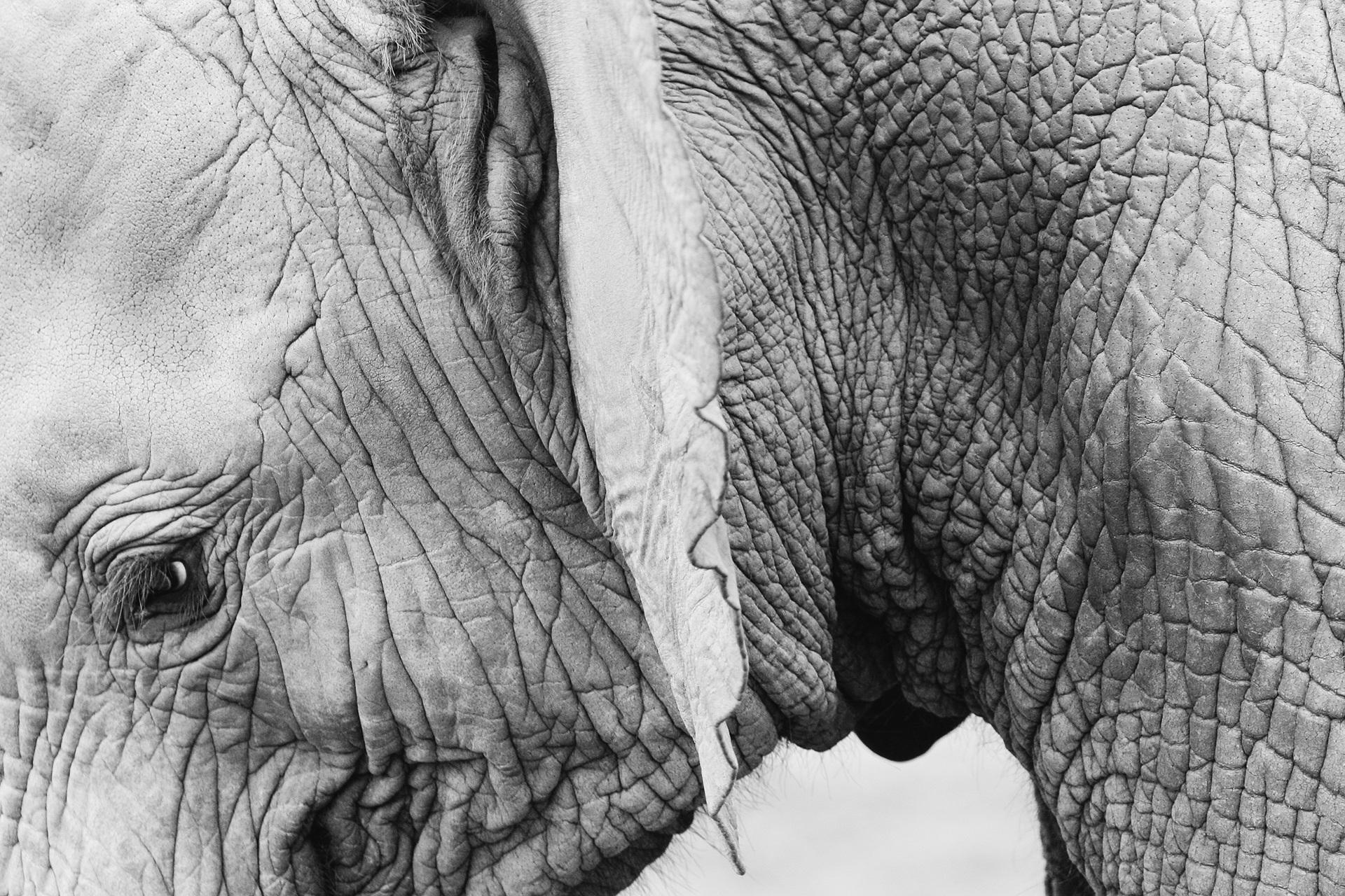 Elephant 820147